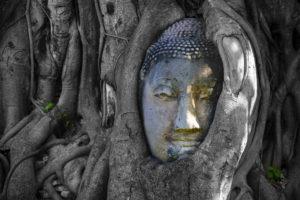 Ayutthaya - Hlava budhy ve stromu